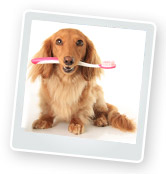 Dental Care for Dogs, Cats, Rabbits & Guinea Pig