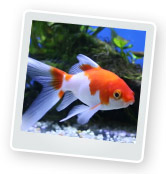 How to Choose Fish: Adding Fish to Your Fish Tank