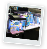 How to Choose a Fish Tank