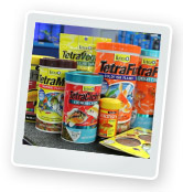 How Much Food Should I Feed my Fish? Fish Feeding Requirements