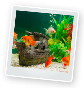 Caring for & Feeding Fish While on Holiday