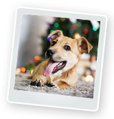 Pets as Gifts: Should You Give a Pet as a Present?