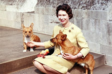 Royal Dogs & Pets: Queen Elizabeth's Corgis, Lupo & More