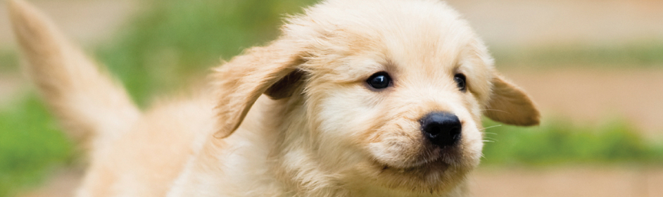 Worming Puppies When Your Puppy Has Worms Petstock Blog
