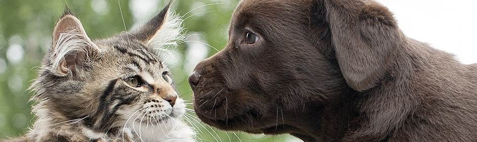 Why vaccinating your pet could save their life