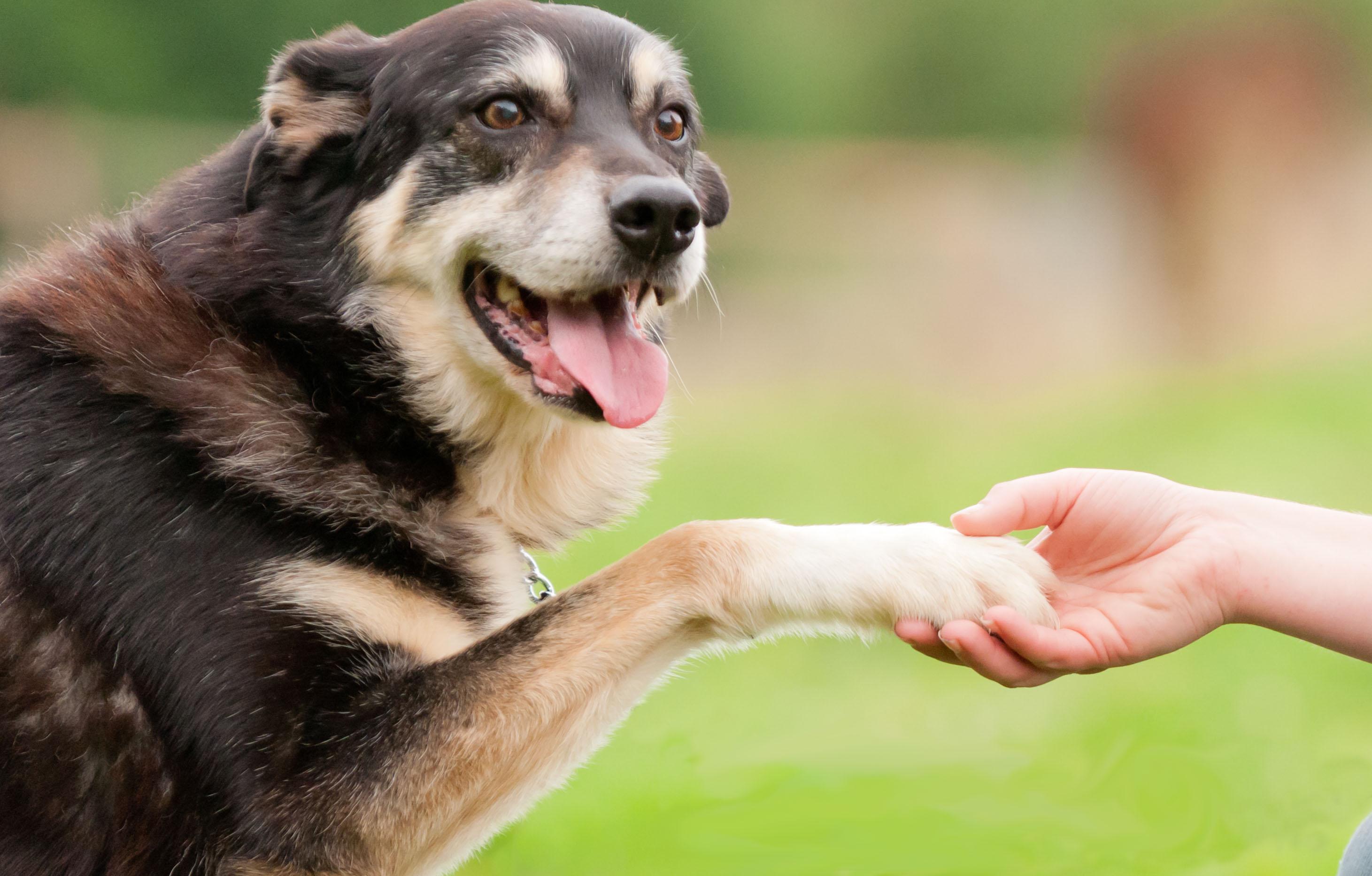 Rescue dog training tips with Lara Shannon - PETstock NZ Blog