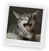 Cat Behaviour: Tips for Litter Box Problems & More