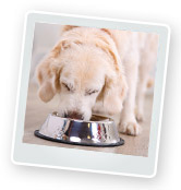 What Do Dogs Eat? What Should I Feed My Dog?