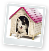 Dog Kennels: Housing & Shelter for Your Dog