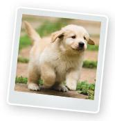 Bringing a Puppy Home: A Puppy Checklist