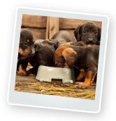 Feeding Puppies: What to Feed a Puppy?