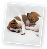 Getting a Puppy – 5 Questions to Ask Yourself