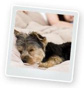 Puppy Grooming: Bathing, Washing & More