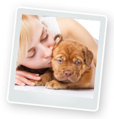 Microchipping Puppies – The Importance of Microchips
