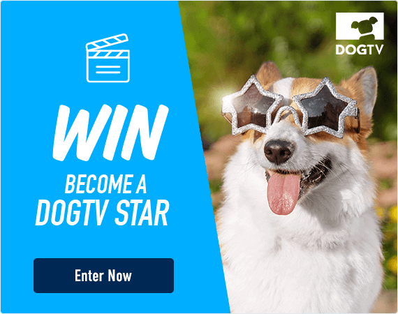 Win - become a DOGTV Star! Click here to enter now!