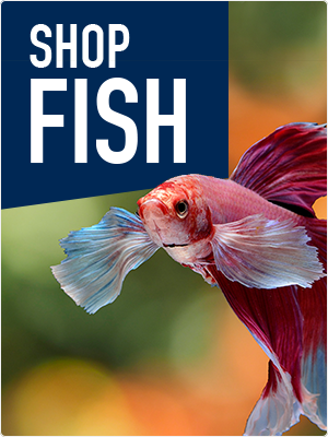 Shop Fish Products