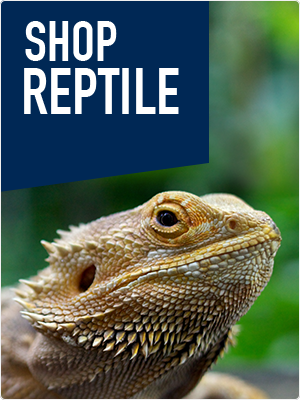 Shop Reptile Products