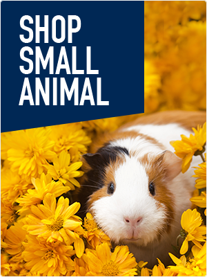 Shop Small Animal Products