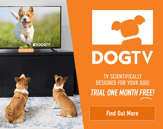 DOGTV - TV scientifically designed for your dog! Trial one month FREE! Click here to find out more.