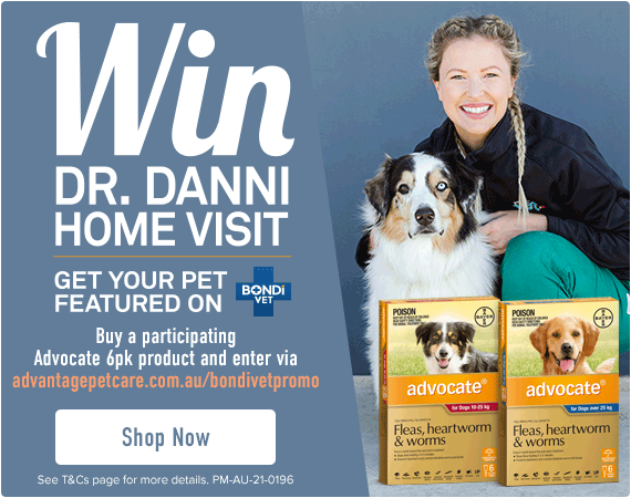 Win Dr. Danni home visit - Get your pet featured on Bondi Vet - Buy any participating Advocate 6pk products and enter via advantagepetcare.com.au/bondivetpromo