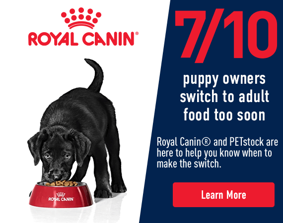 7 out of 10 puppy owners switch to adult food to soon