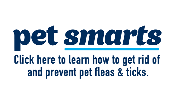 Click here to learn how to get rid of and prevent pet fleas & ticks.
