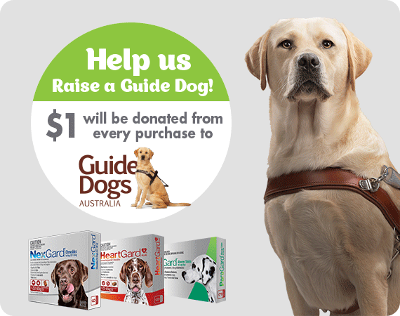 Help us raise a guide dog.