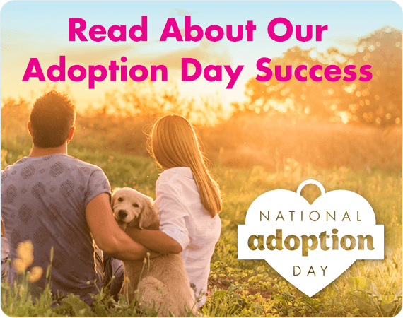 PETstock Assist - Adoption Day Success Stories