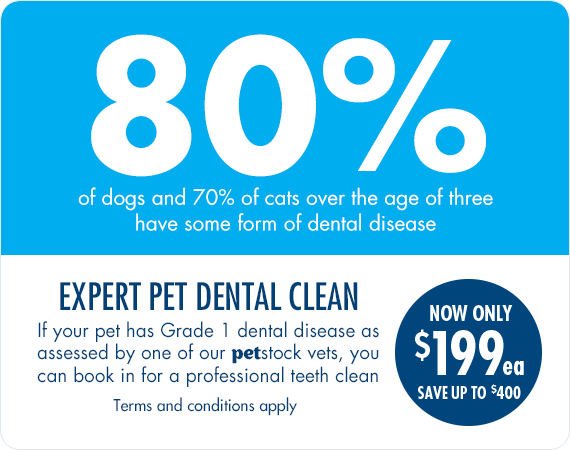 Expert Dental Clean - NOW ONLY $199 each