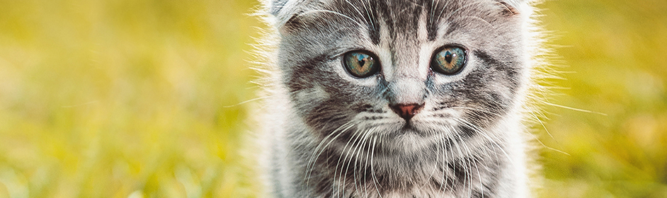 Worming Kittens - Symptoms & Treatment for Worms - PETstock Blog