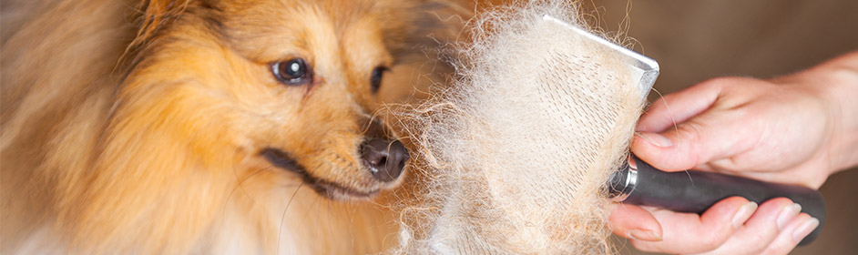 how to get matts out of dog fur