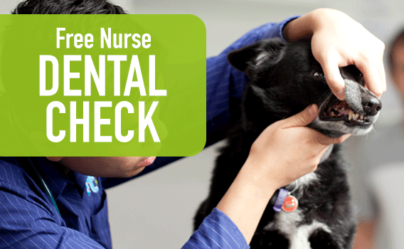 PETstock Vet | Veterinary Services