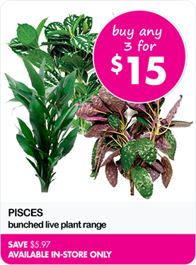 buy any 3 for $15 Pisces bunched live plant range