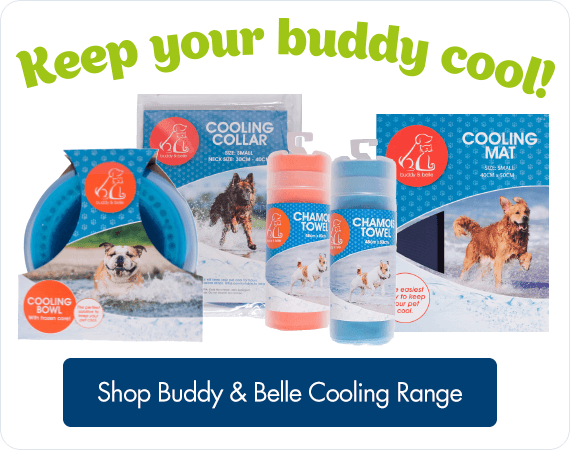 Keep your Buddy cool! Shop Buddy & Belle Cooling Range