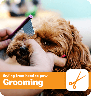 Styling from head to paw with PETstock Grooming Services