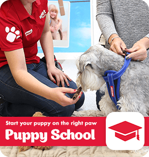 Start your puppy on the right paw with PETstock Puppy School