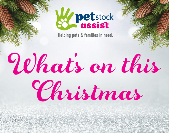Pet Stock Assist: What's On This Christmas.