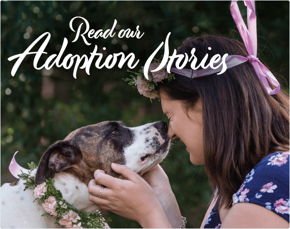 Read Our PETstock Assist Adoption Stories!