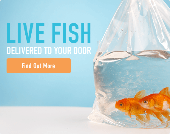 Live Fish Delivered to Your Door - Find Out More