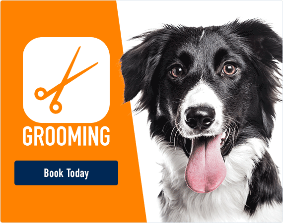 Grooming - Book Today