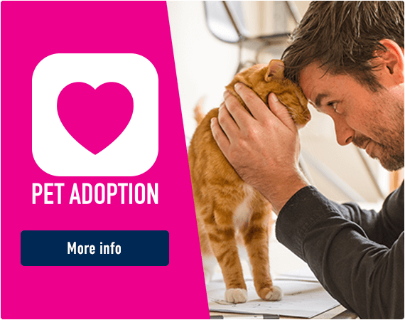 Pet Adoption - More Info