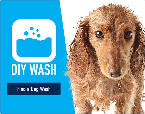 DIY Wash - find a dog wash!