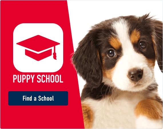 Puppy School - Find a School!