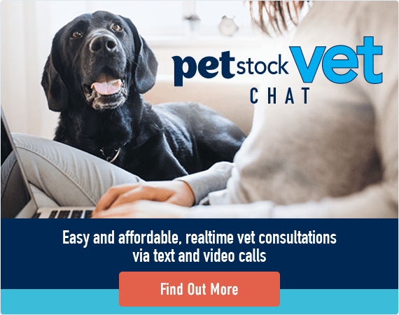 Vet Chat - Find out More